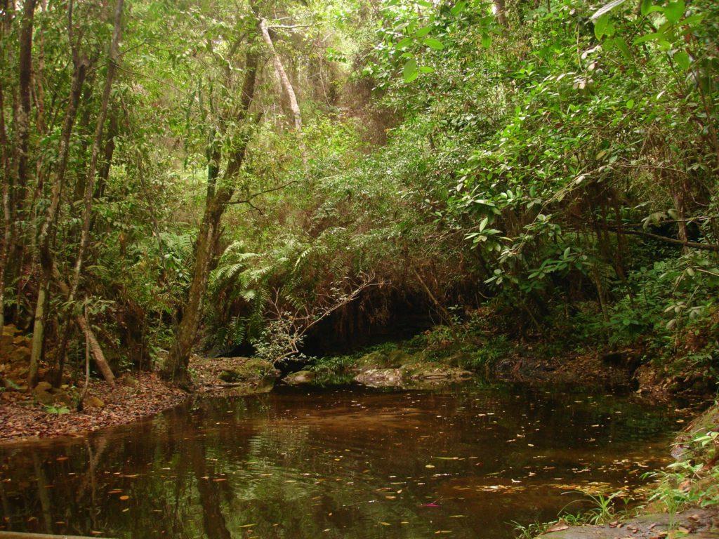 venta lotes y casas campestres colombia carmen de apicala fruworld senderos ecologicos