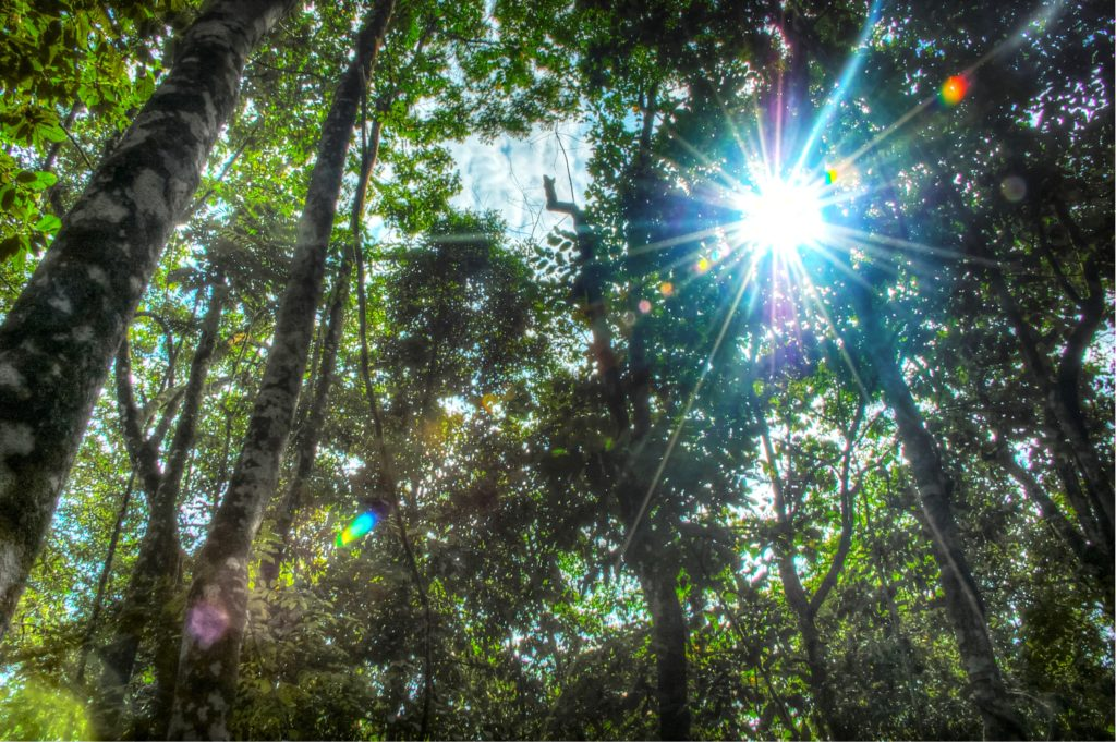 venta lotes y casas campestres colombia carmen de apicala fruworld  bosques naturales